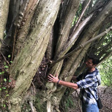 Ross hugging a tree