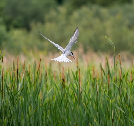 Bird flying over grassland
